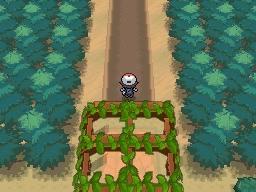Guía Pokémon Blanco / Negro 062